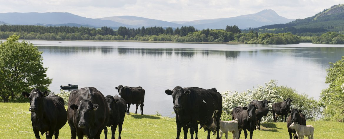 Farming in Perthshire
